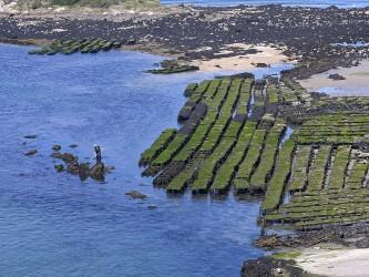 Austernzucht Bretagne