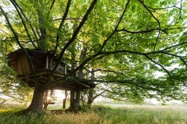 Ferienhaus in den Bäumen